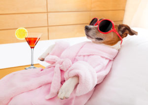 dog lounging with drink in robe