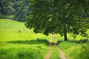 http://www.dreamstime.com/royalty-free-stock-photo-country-path-image23382905