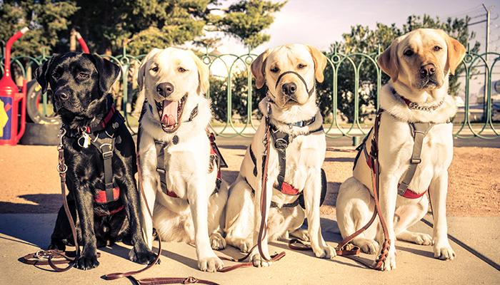 Dementia dogs