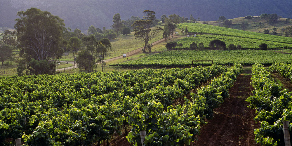 Hunter Valley Vineyard Tour, Boutique Accommodation & Hot Air Ballooning