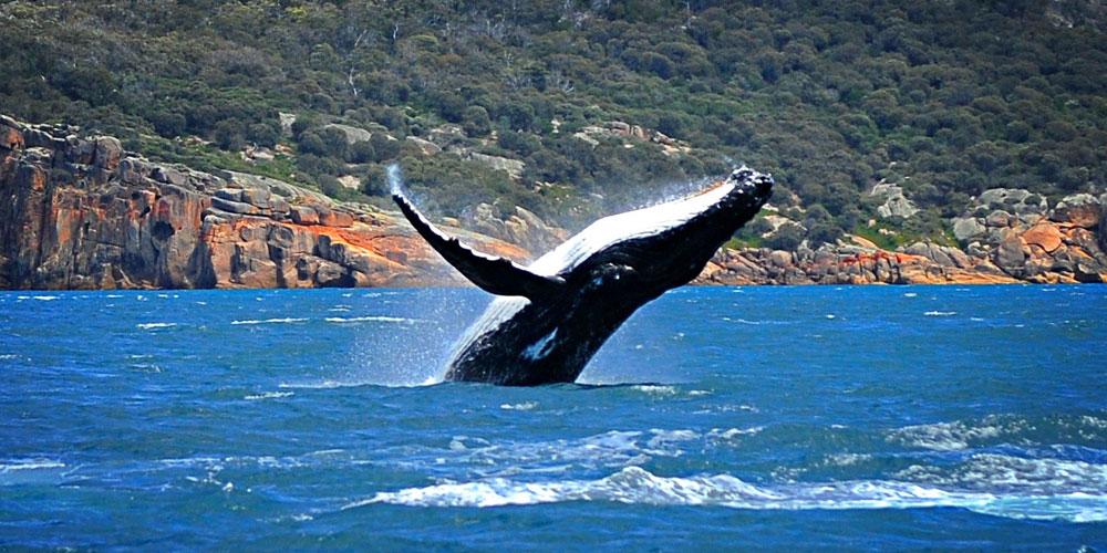 Whale Watching Aboard A Luxury Catamaran Plus Brunch & Seaplane Flight