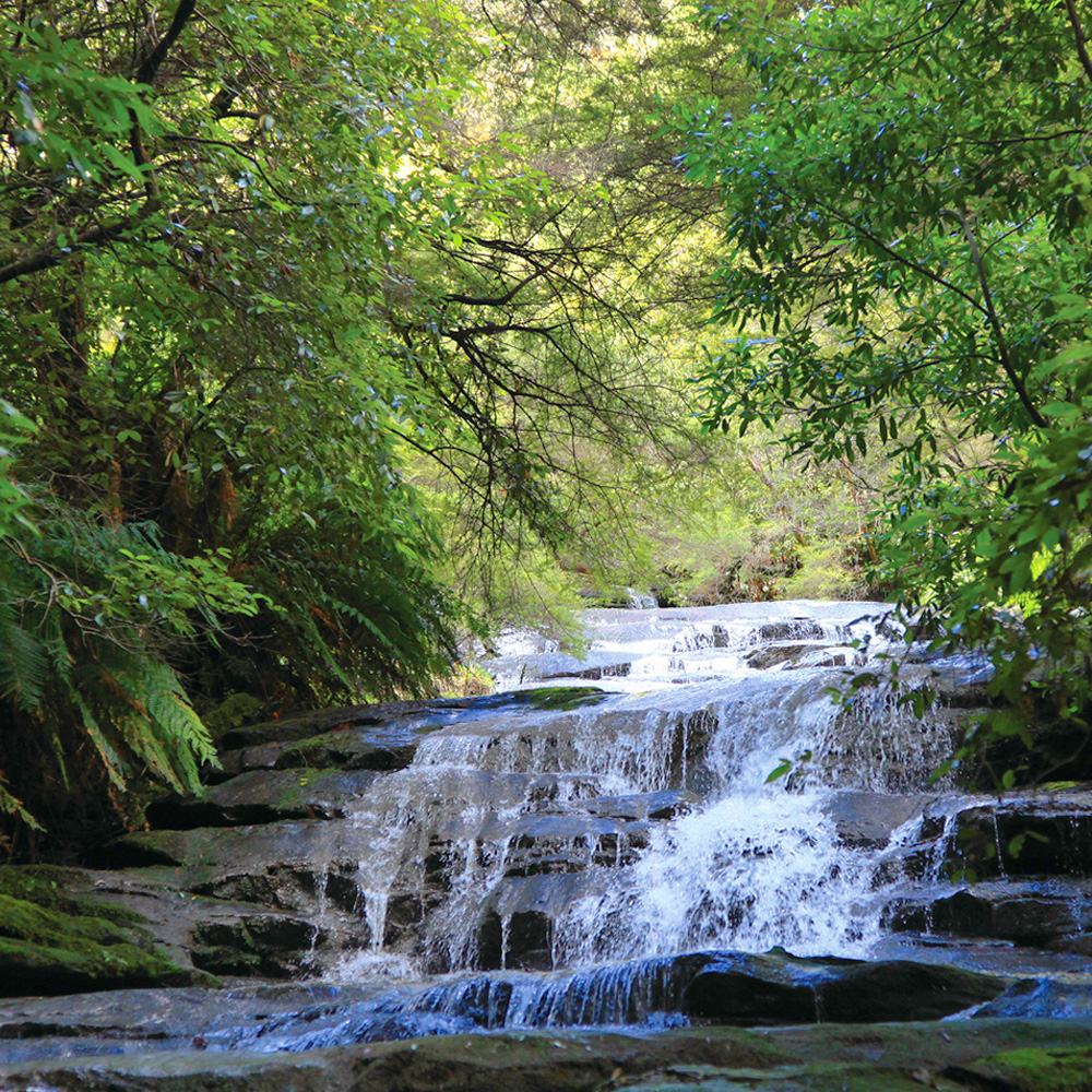 blue mountains tour waterfall