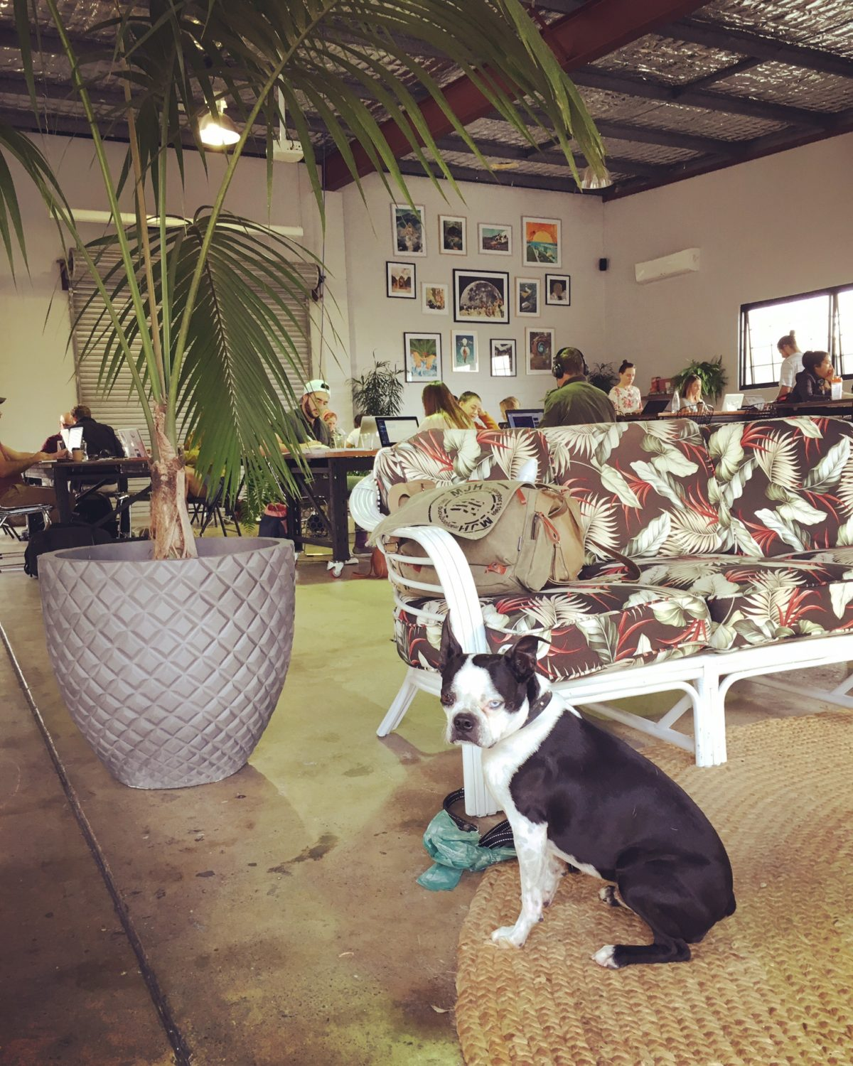 Brain's Pet Friendly Cafe Discovery Mission – Warehouse No. 5