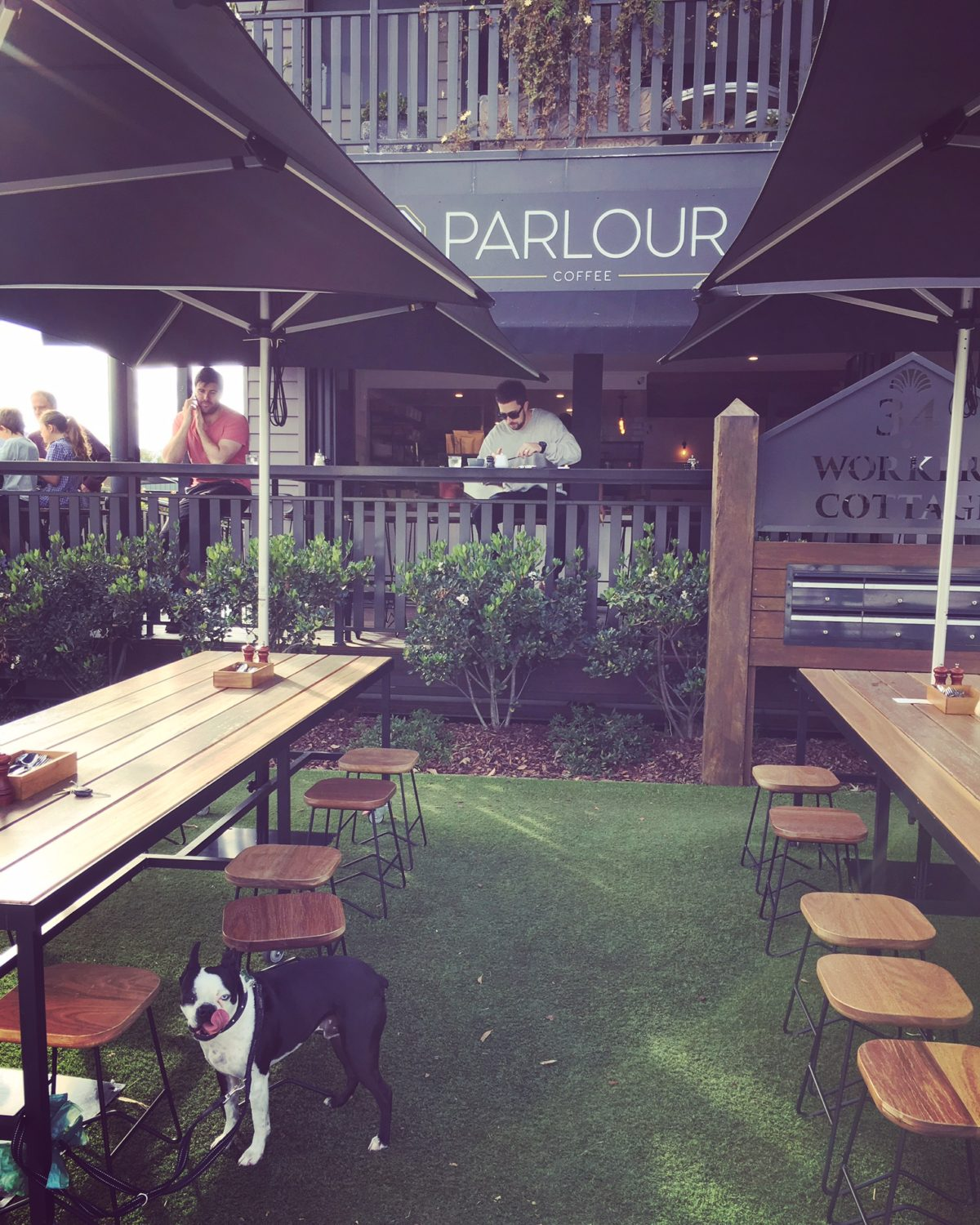 Brain's Pet Friendly Cafe Discovery Mission – Parlour, West Burleigh