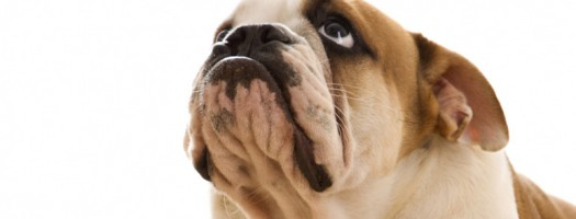 Need Help With A Fearful Dog?