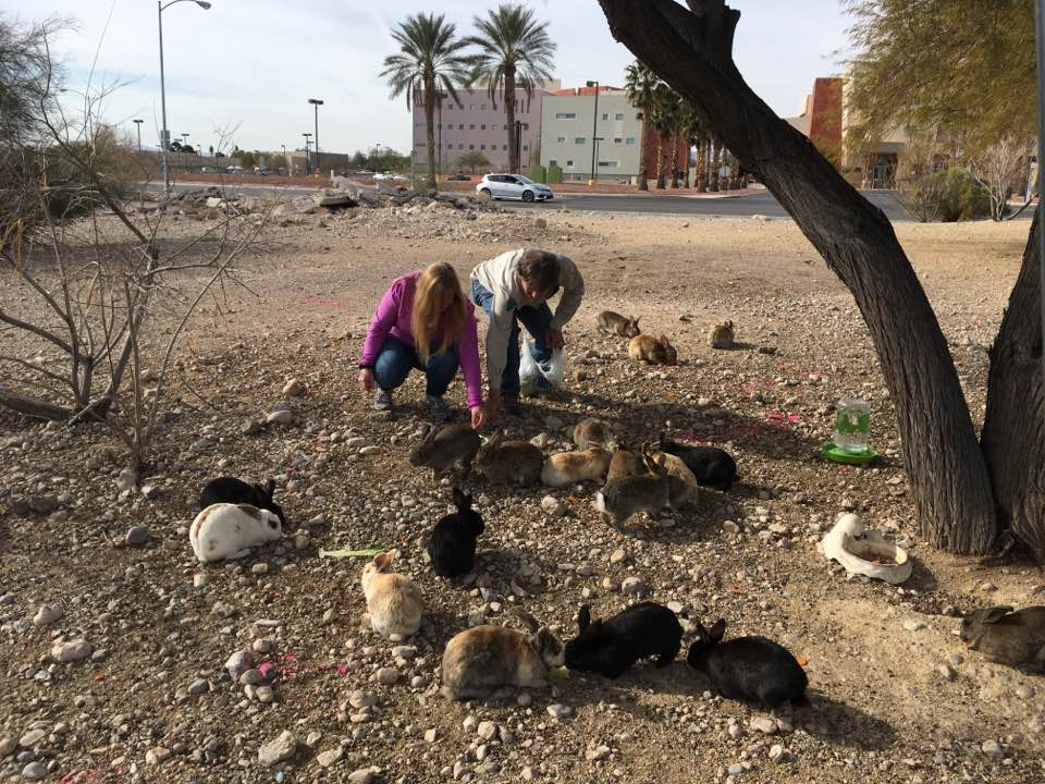 Bunnies Matter Volunteer Bunny Heroes