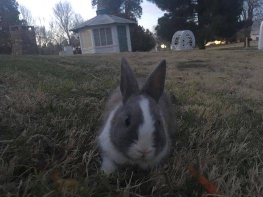 Dumped Bunny at FLP