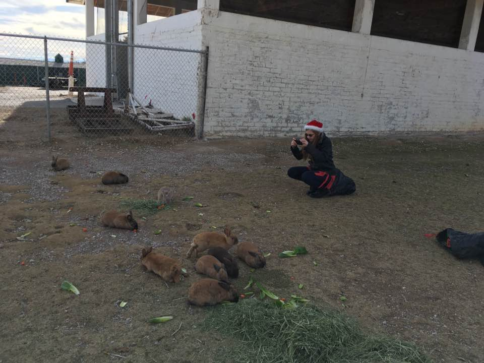 Floyd Lamb Park at Christmas