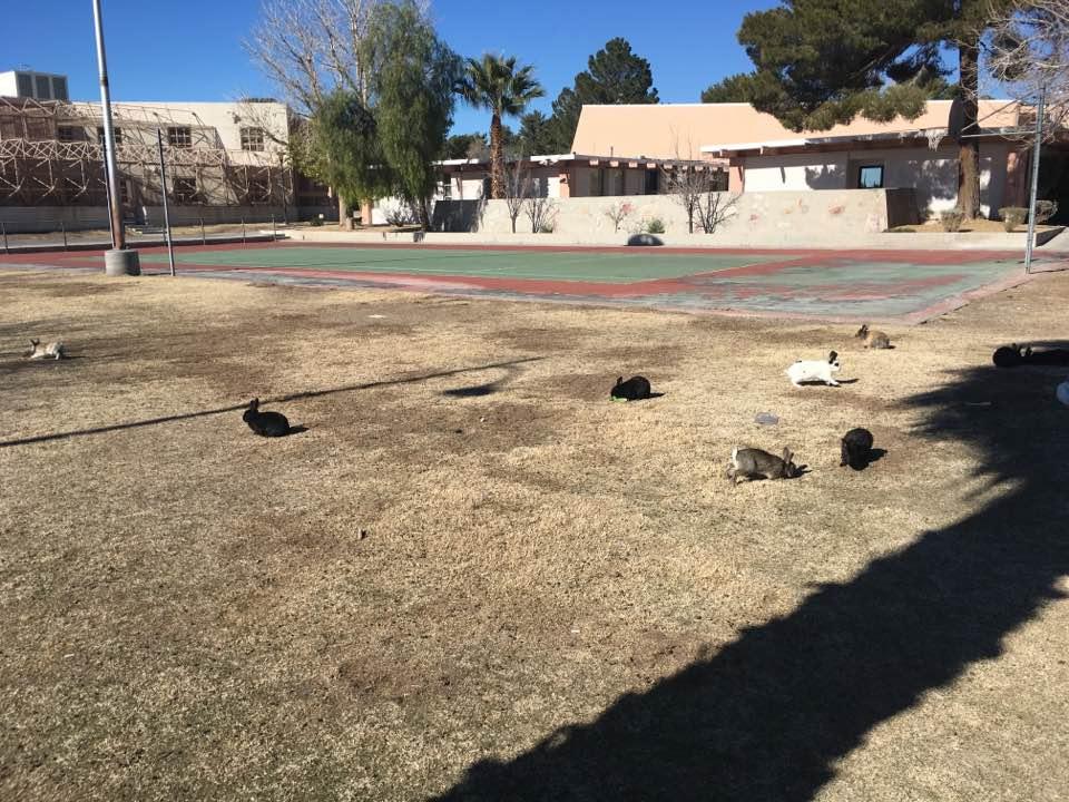Tennis Court Dump Site