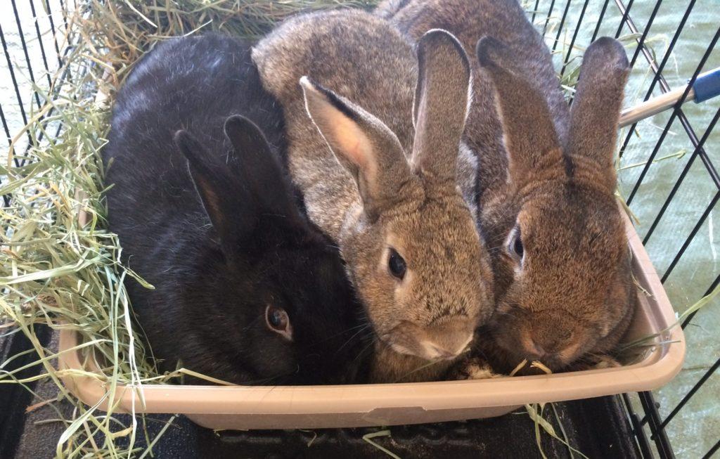 Bunnies Matter