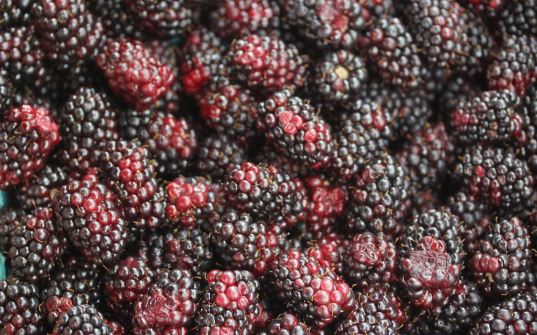 Deep-Dish Blackberry Pie with Blackberry Sauce from Edna Lewis