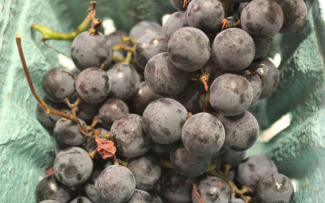 Concord Grape Syrup from The Soda Fountain