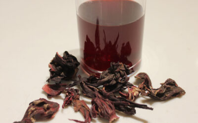Hibiscus Syrup and the Snake's Blood Cocktail from Ama