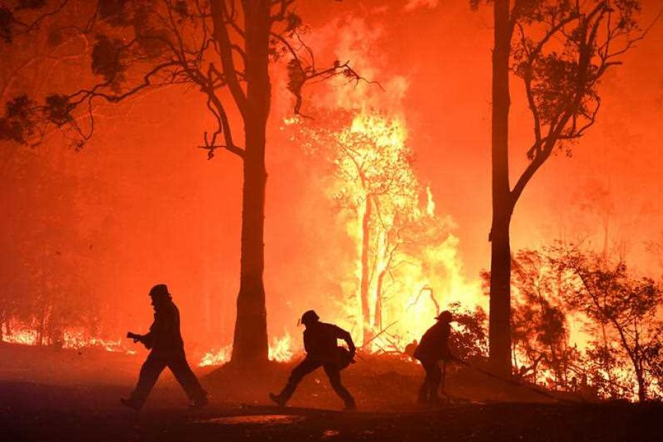 PHOTO: Firefighters at work on the Currowan fire between Batemans Bay and Ulladulla earlier this week. (ABC )