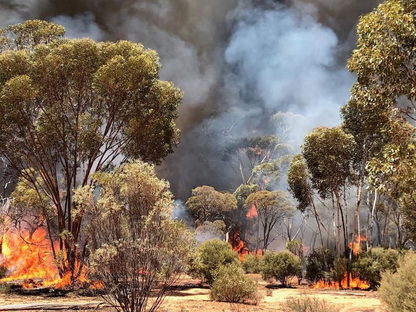 The blazes near Norseman. Credit: South West Task Force Alpha