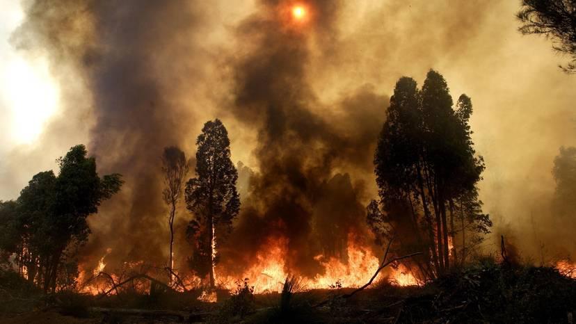 Pilbara News: Increased growth a fire risk