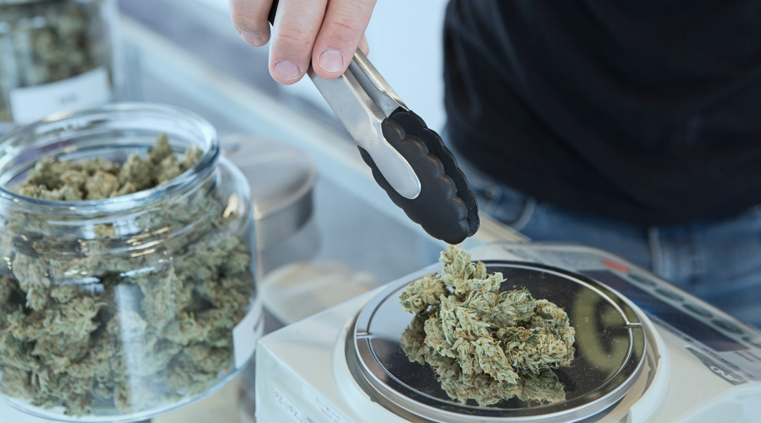 What Is The Best Cannabis Strain For Beginners?
