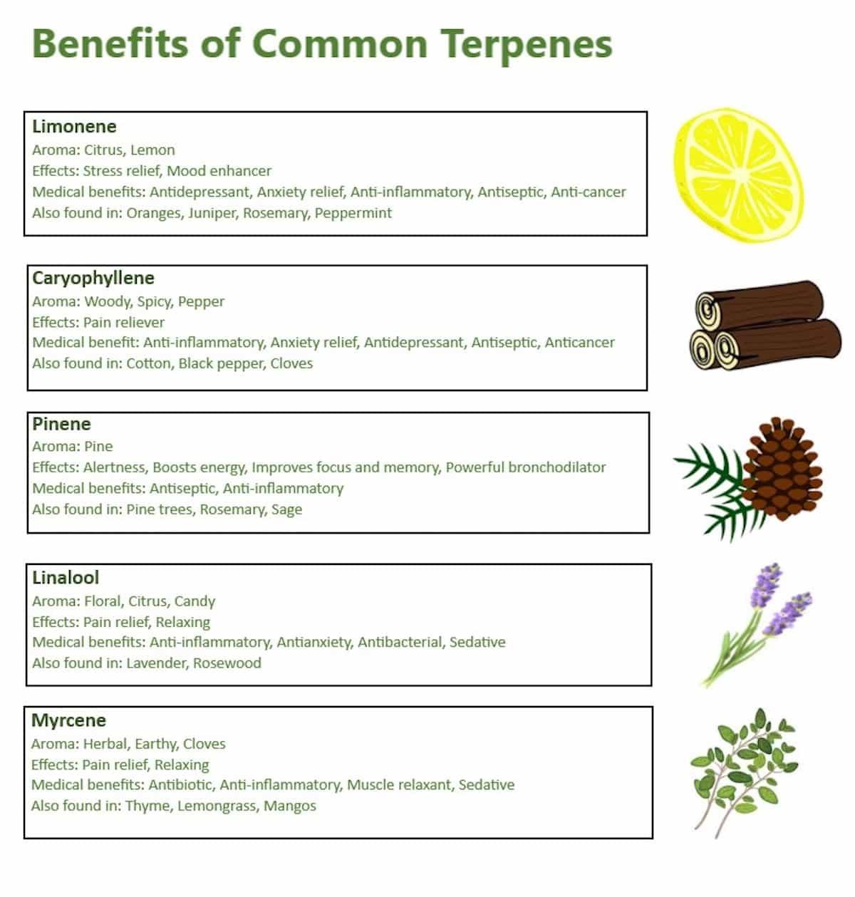 Common Terpenes