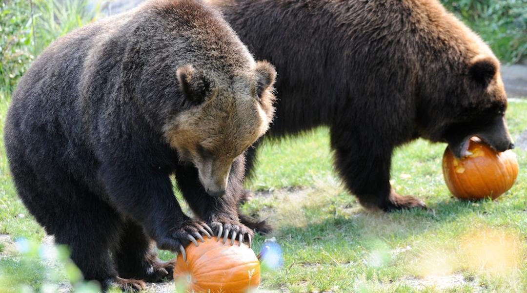 What is Spooky Bear Weekend?