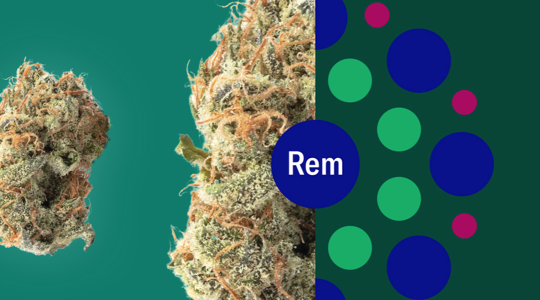 Explore Cannabis Strains with a New Perspective