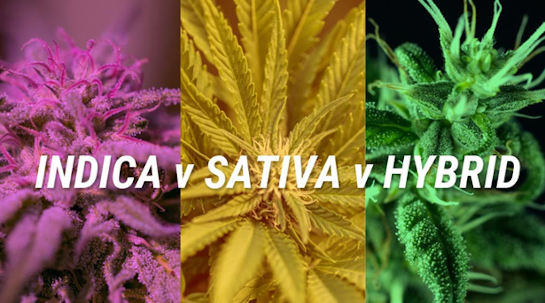 Indica vs. sativa: What's the difference between cannabis types?