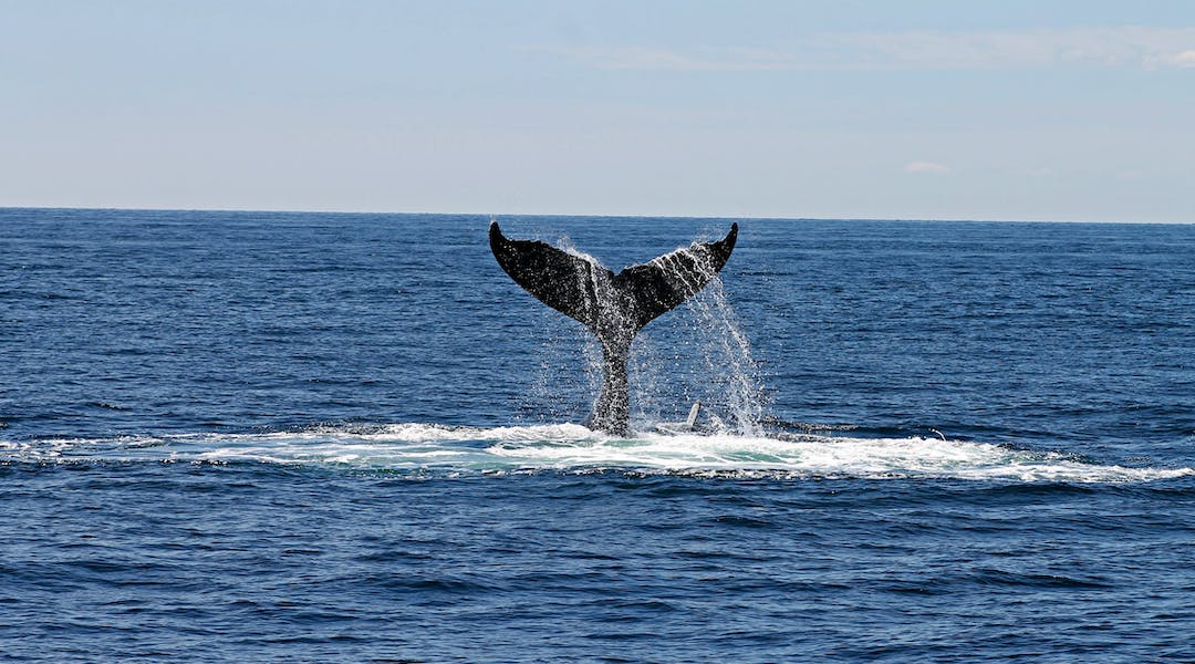 What is Whale Week?