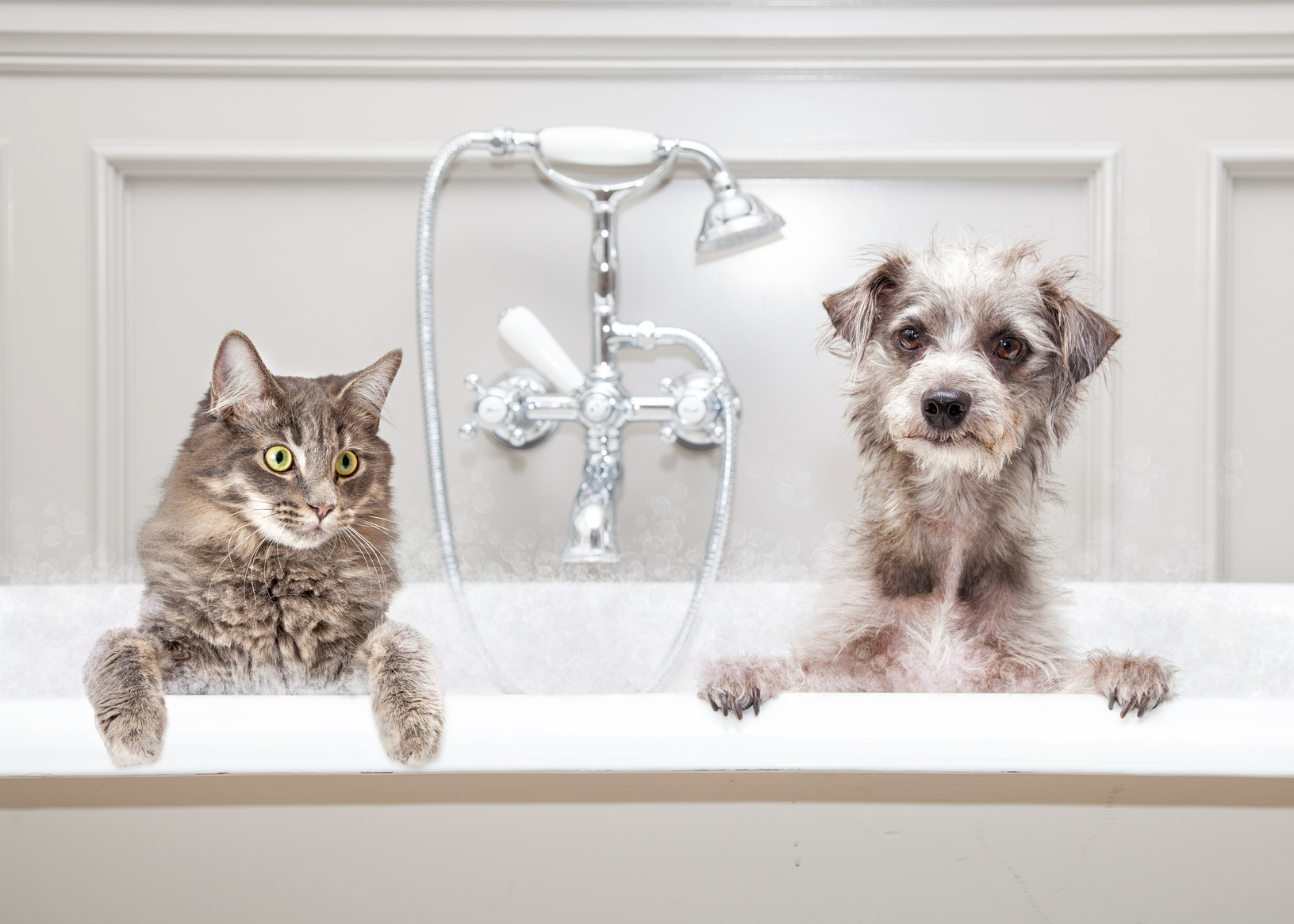 Gray color cat and dog sitting together in a luxury tub in an upscale bathroom