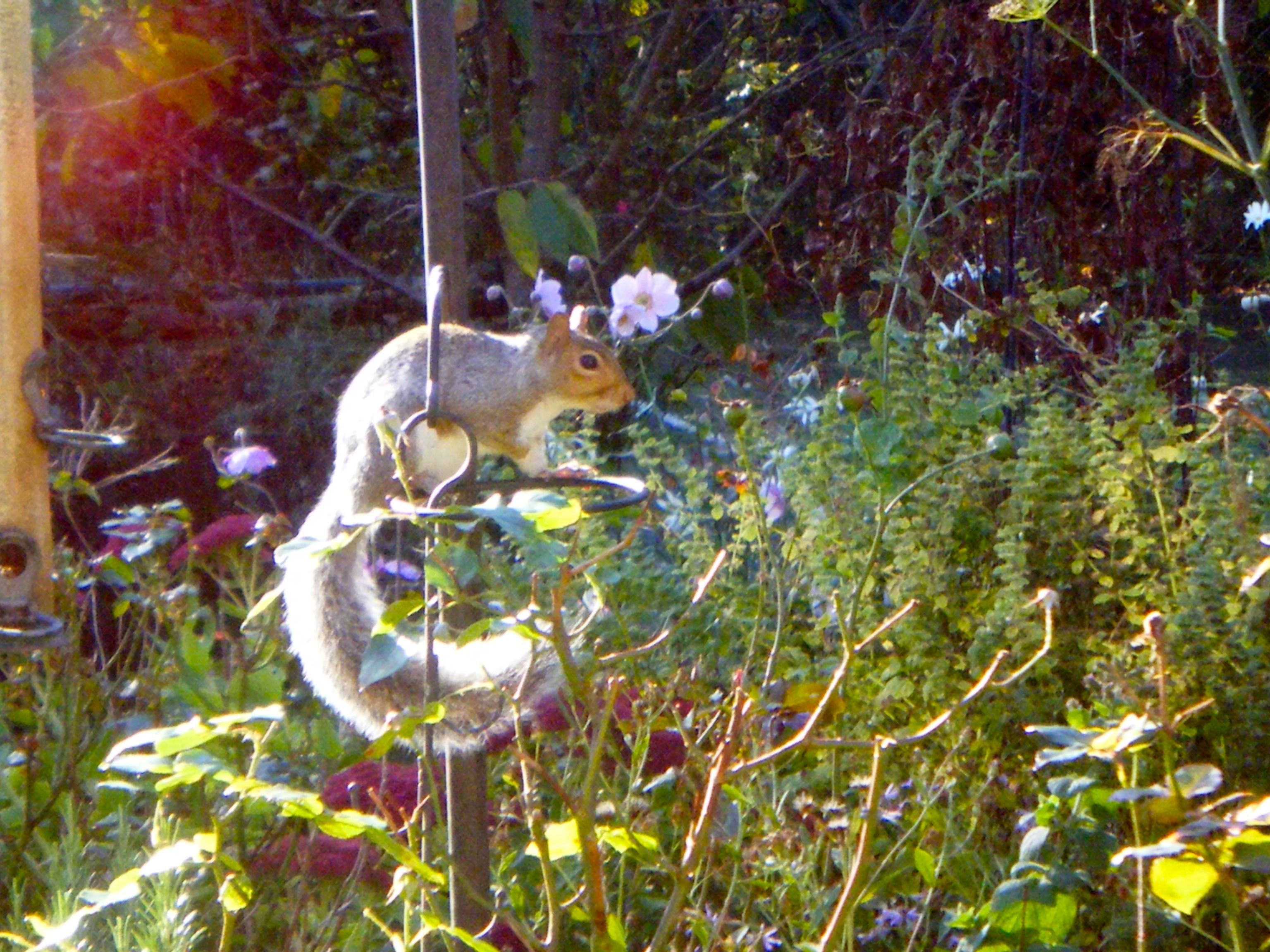 Image of a squirrel listening