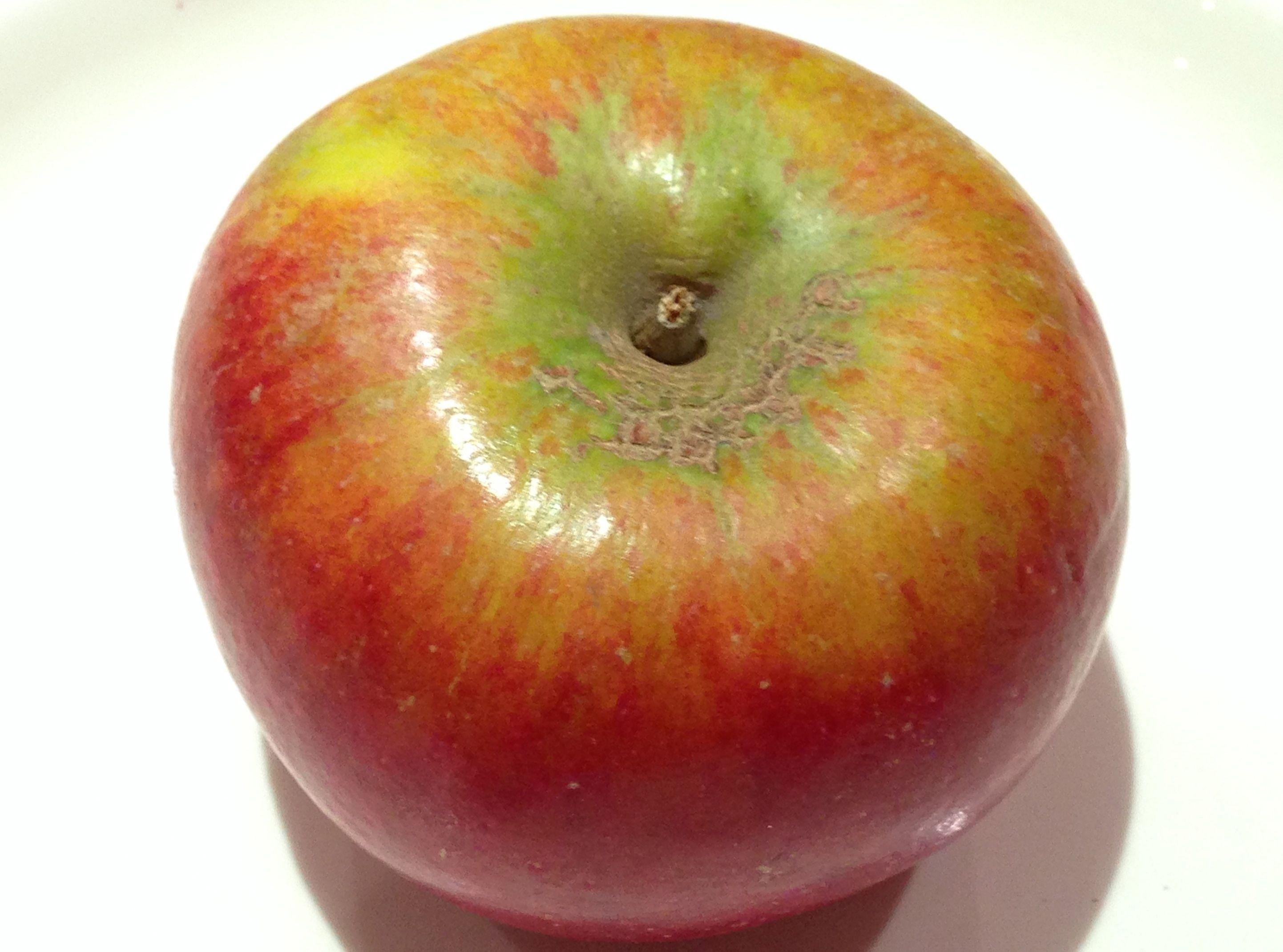 image for a pomme de reinette apple