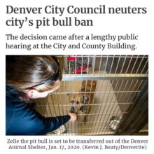 DENVER FINALLY ENDS 30 YEAR GENOCIDE AGAINST DOGS LABELED PIT BULLS