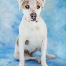 SUFP HOPE CAMPAIGN BELLA ADOPTED