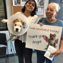 Spay & Neuter ANGEL Day – May 23rd Tulare CA!