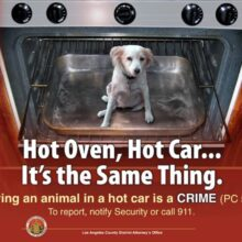It is a CRIME to leave a dog in a hot car.