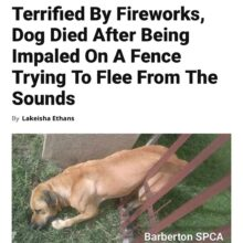 PLEASE CONSIDER PETS, WILDLIFE and HUMANS THIS 4TH OF JULY AND FOREVER