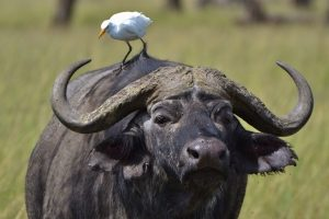 Egret + Ox Urban and Community Planning