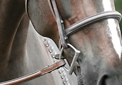 horse home page category image