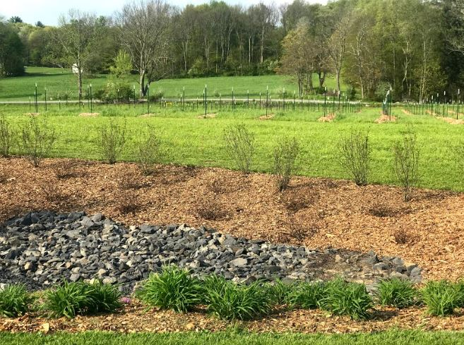 Learn about local successes in stormwater management.