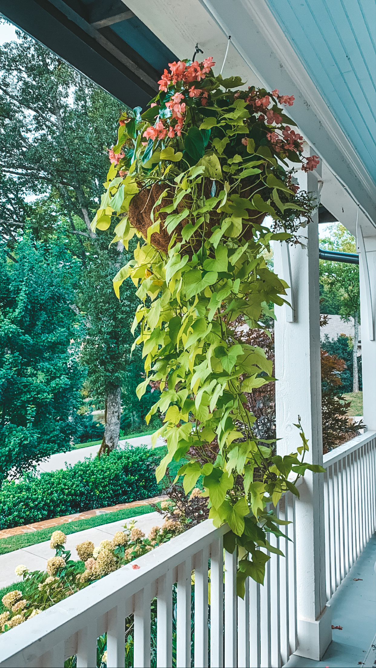 How to Automatically Water Your Patio Plants and Hanging Baskets
