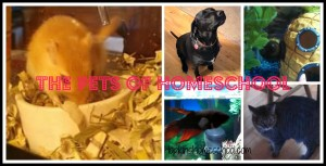 The Pets of Homeschool