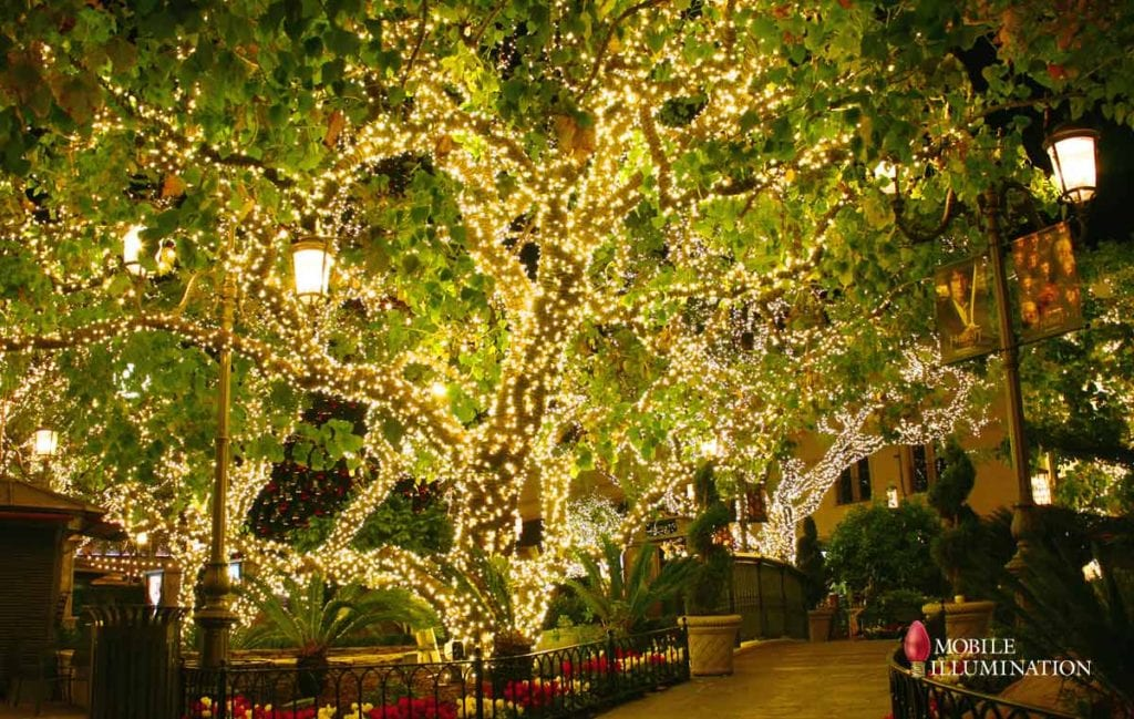 tree wrapping and tree lighting