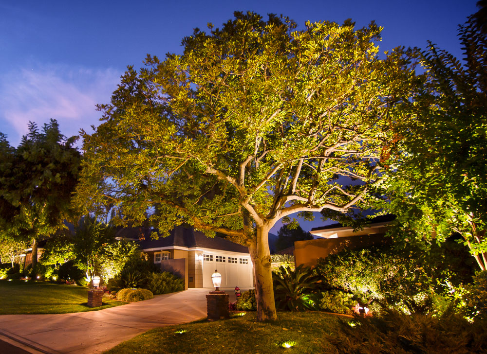 In-Ground Tree Uplighting