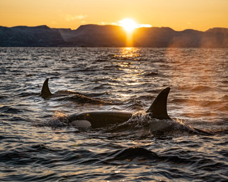 Sedna Epic Expedition – Winter Whales of Norway 2021