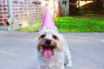 Maybe we should all be as happy as this dog in a birthday hat