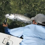 Islamorada Bonefish On Fly