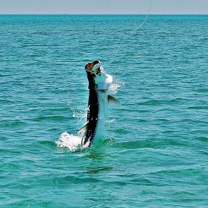go-tarpon-fishing-in-islamorada-and-the-everglades2