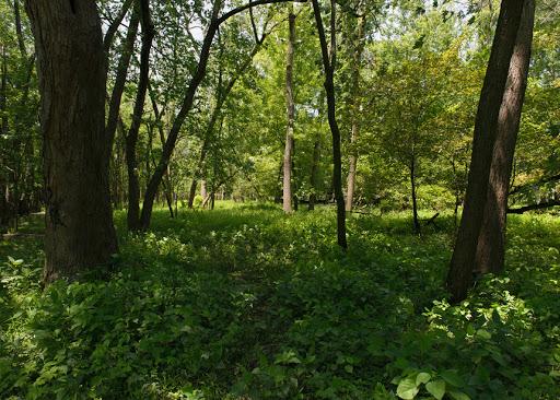 غابات لاباغ