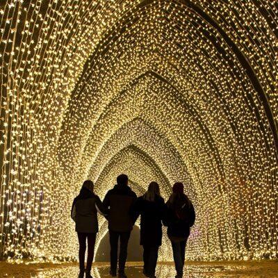 نفق لامع من الأضواء سينير حديقة شيكاغو النباتية هذا الشتاء