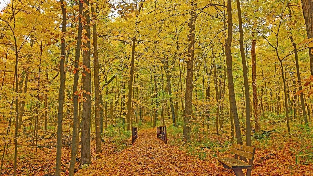 مشتل مورتون يوفر علاج المشي بالغابة للتخلص من التوتر والإرهاق