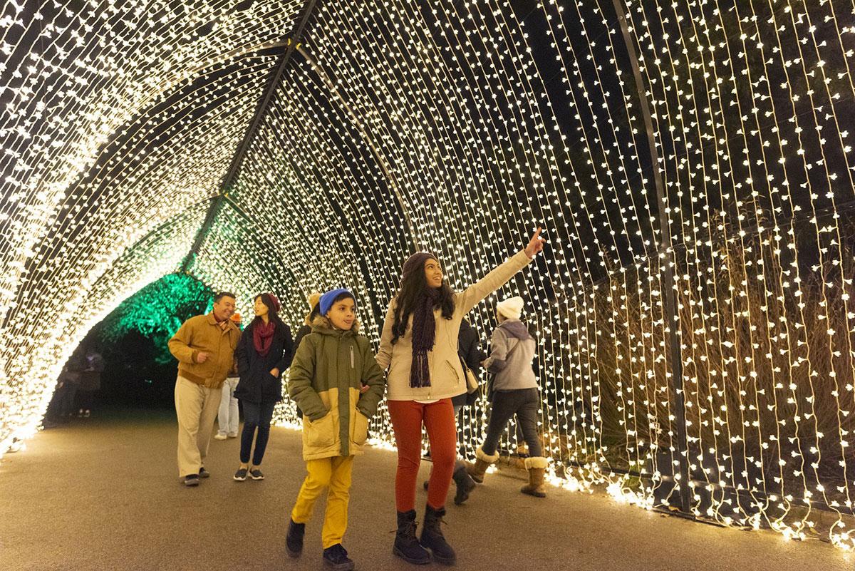 أفضل الأماكن لمشاهدة أضواء عيد الميلاد المبهرة في شيكاغو