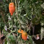 Noma Greenhouse